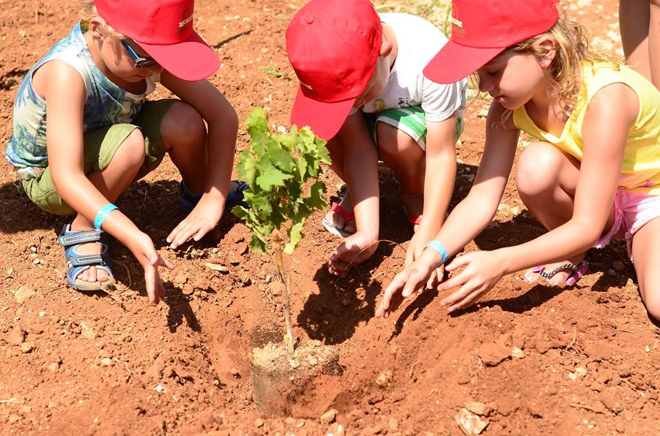 Young planters from the Ceta Maris Kids Club are planting vines of indigenous varieties in the resort vineyard.