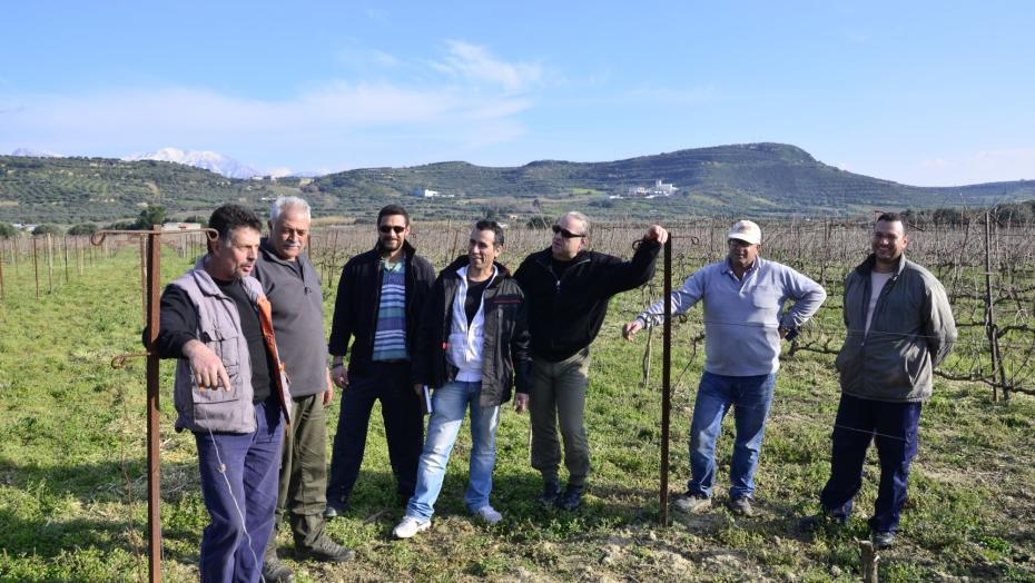 Bauern im Weinberg, sustainable winegrowing