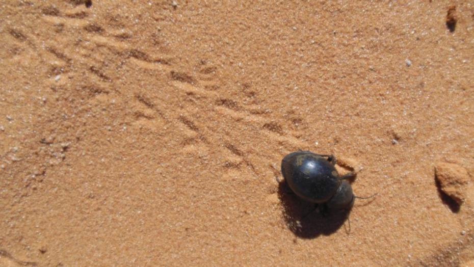 spurenleser-namibia-2014-16