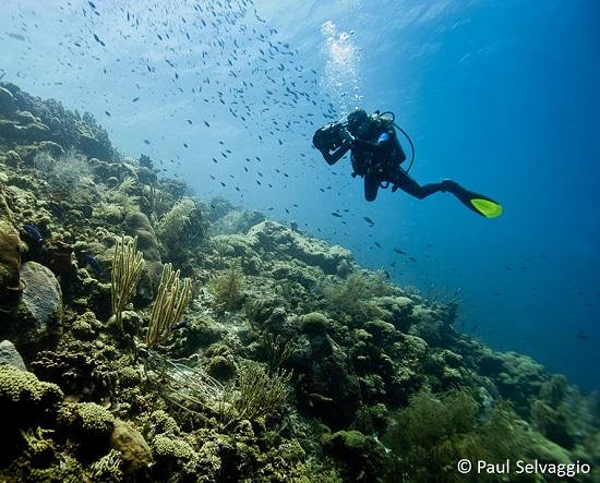 taucher-im-korallenriff